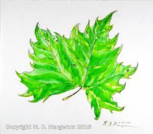 sycamore-leaf-web-9-16-16